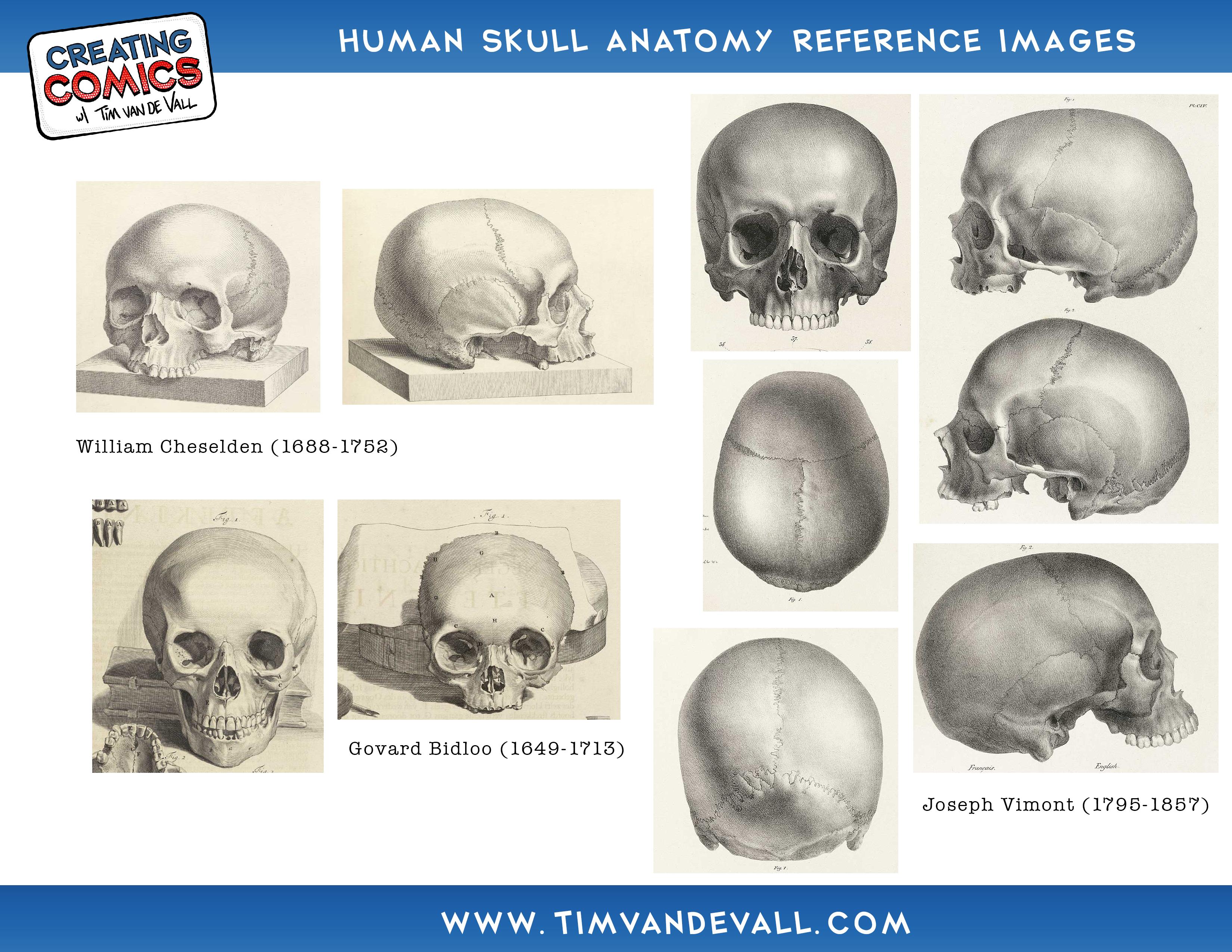 Human Anatomy Skull Pictures Human Skull Anatomy