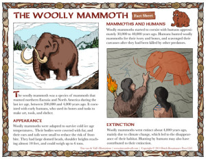 Woolly Mammoth Handout