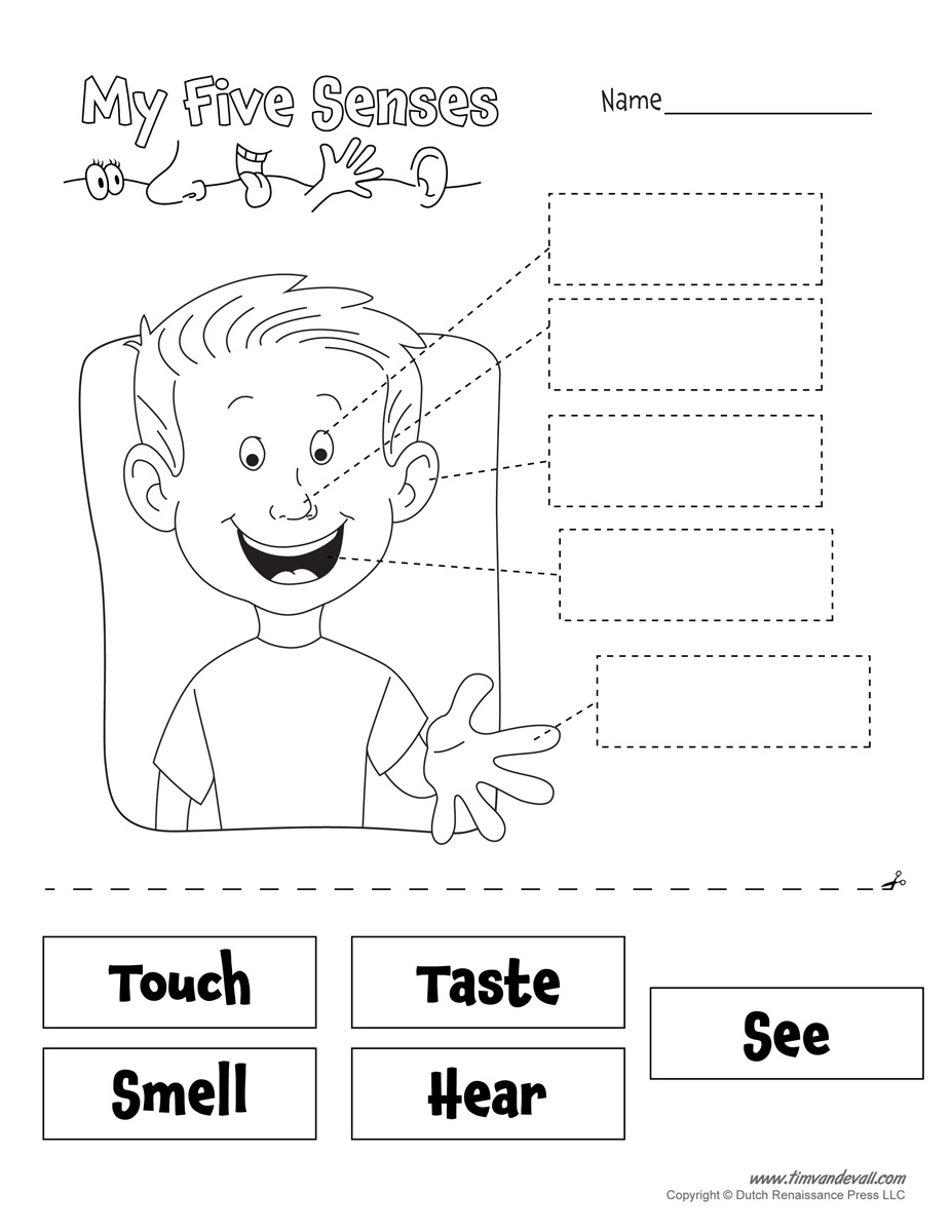 Five Senses Worksheet - Tim's Printables
