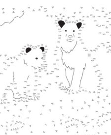 Bear Dot-to-Dot
