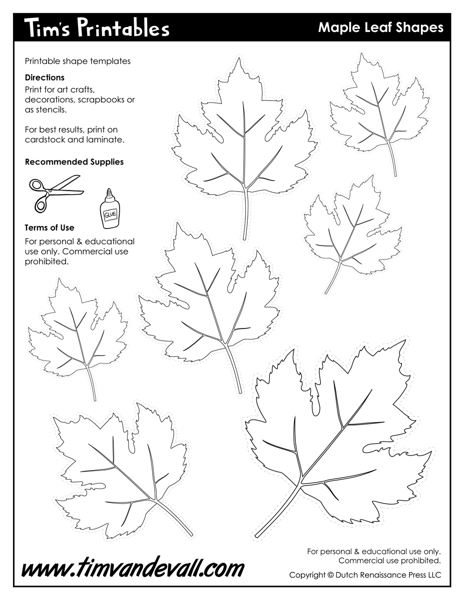 photograph about Leaf Shapes Printable titled Maple Leaf Styles - Tims Printables