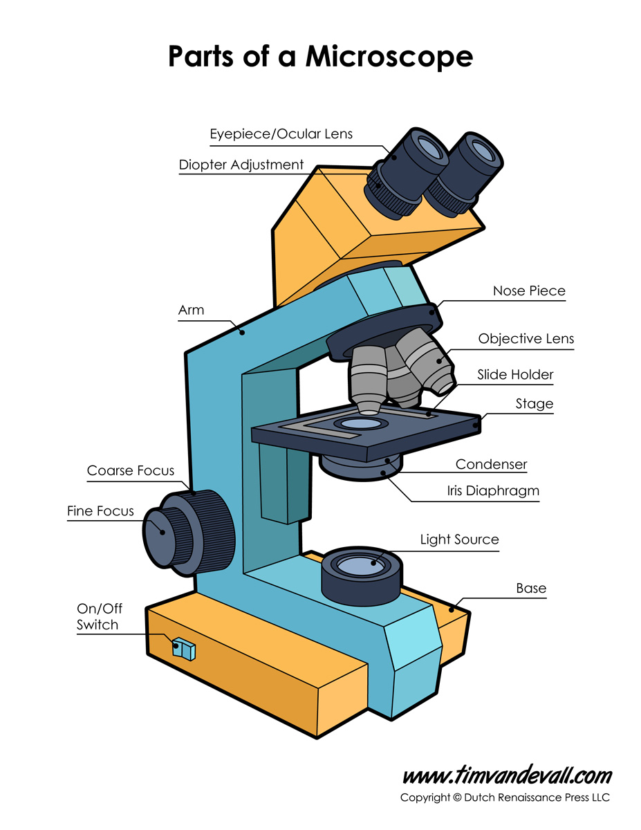 microscope diagram labeled unlabeled and blank parts of a microscope. Black Bedroom Furniture Sets. Home Design Ideas
