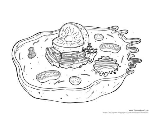 animal-cell-diagram-not-labeled-1 - Tim's Printables