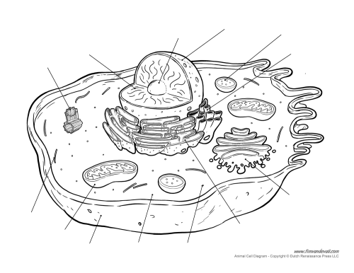 animal-cell-diagram-unlabeled