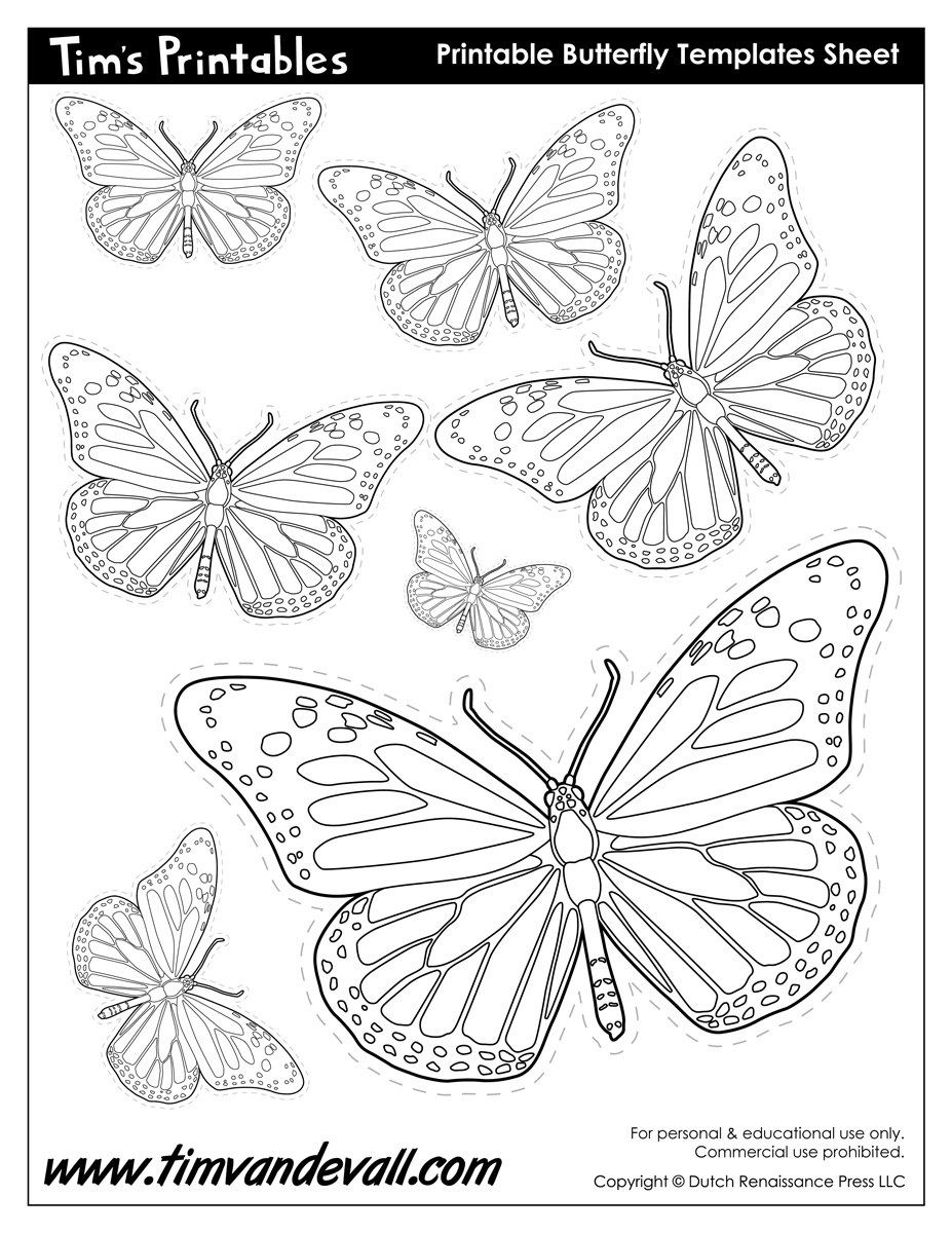 picture about Printable Butterfly Template named Printable Butterfly Templates and Butterfly Designs