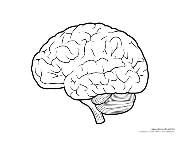Human brain diagram labeled unlabled and blank human brain parts human brain anatomy diagram of human brain ccuart Gallery