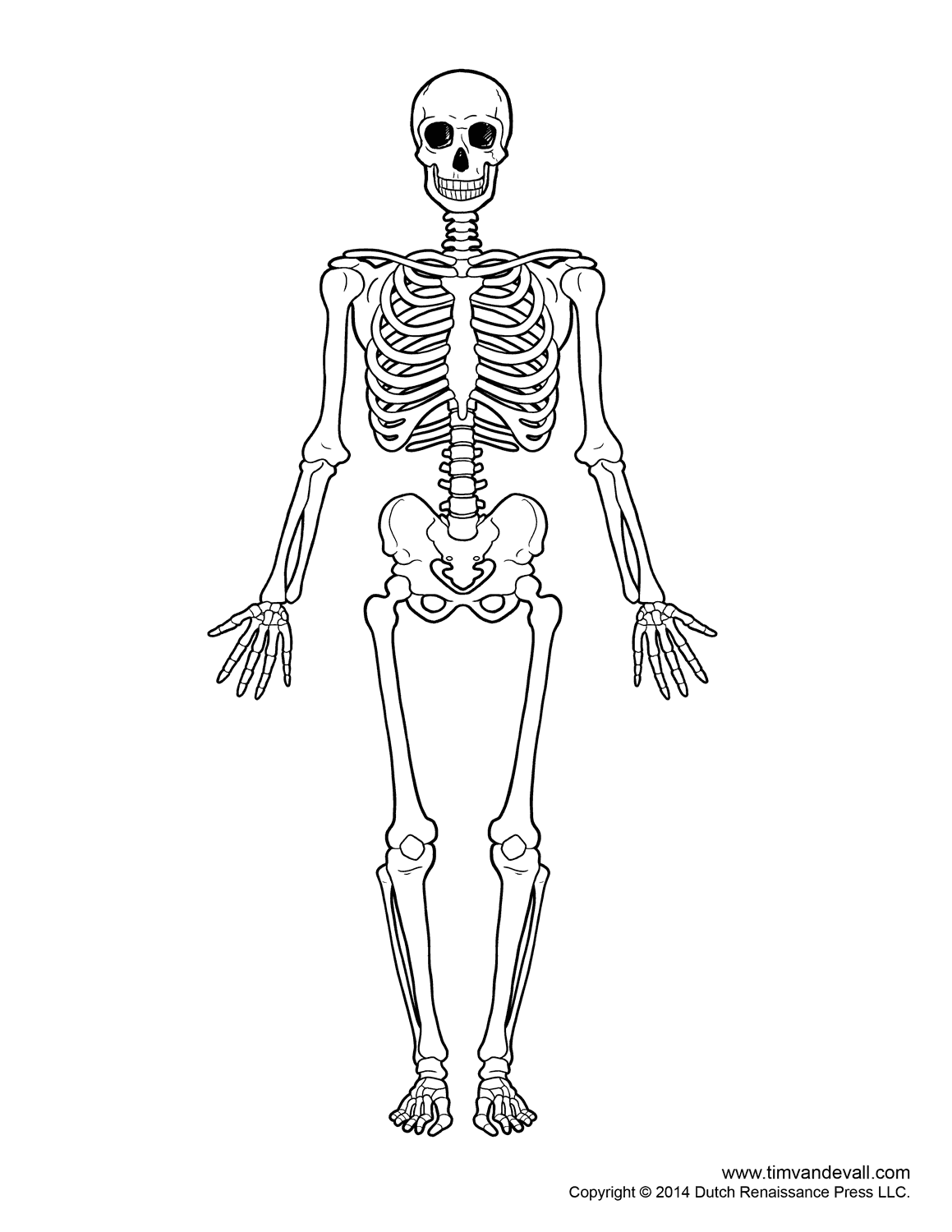 Simple skeleton
