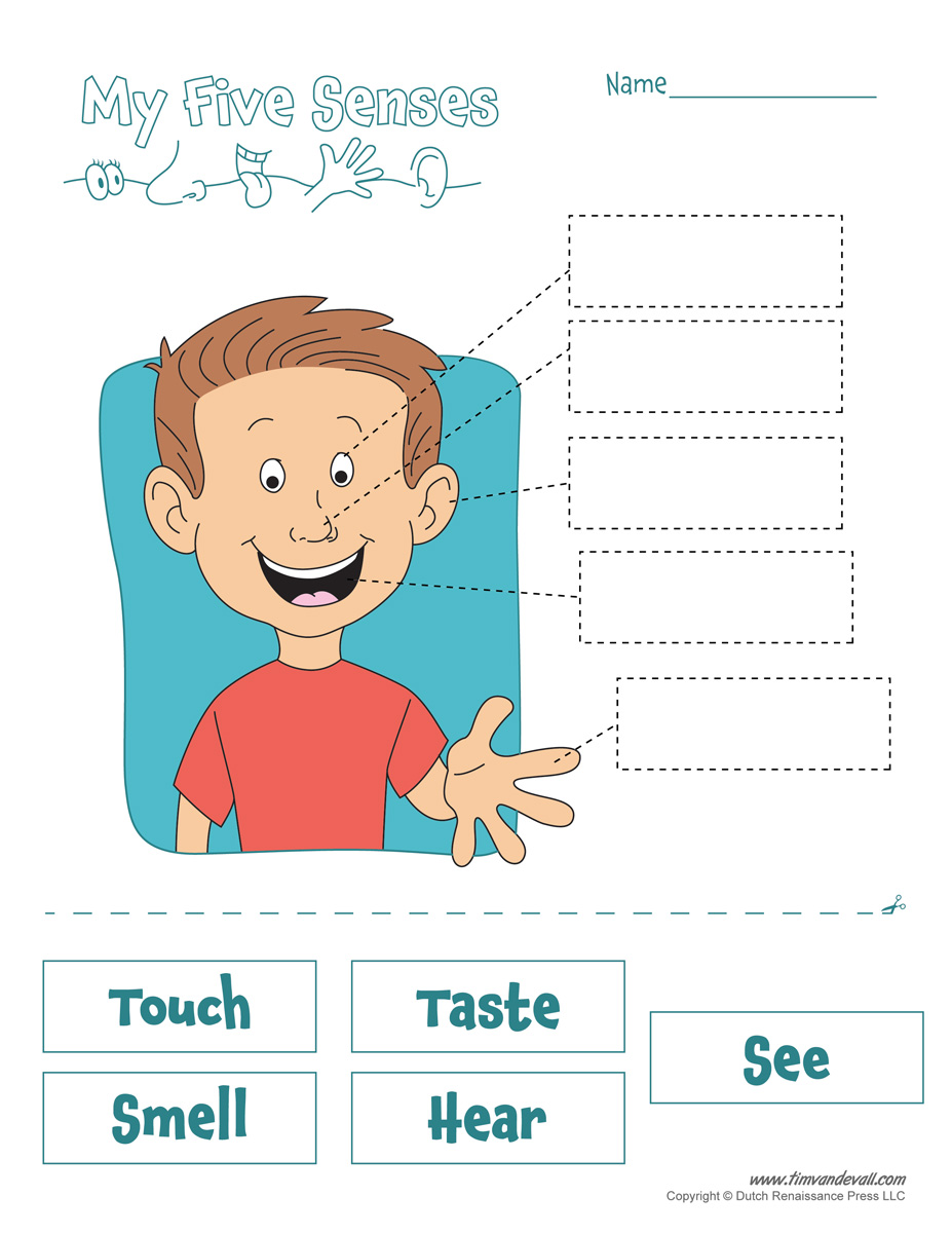 Worksheets Five Senses Worksheet five senses worksheet tims printables worksheet