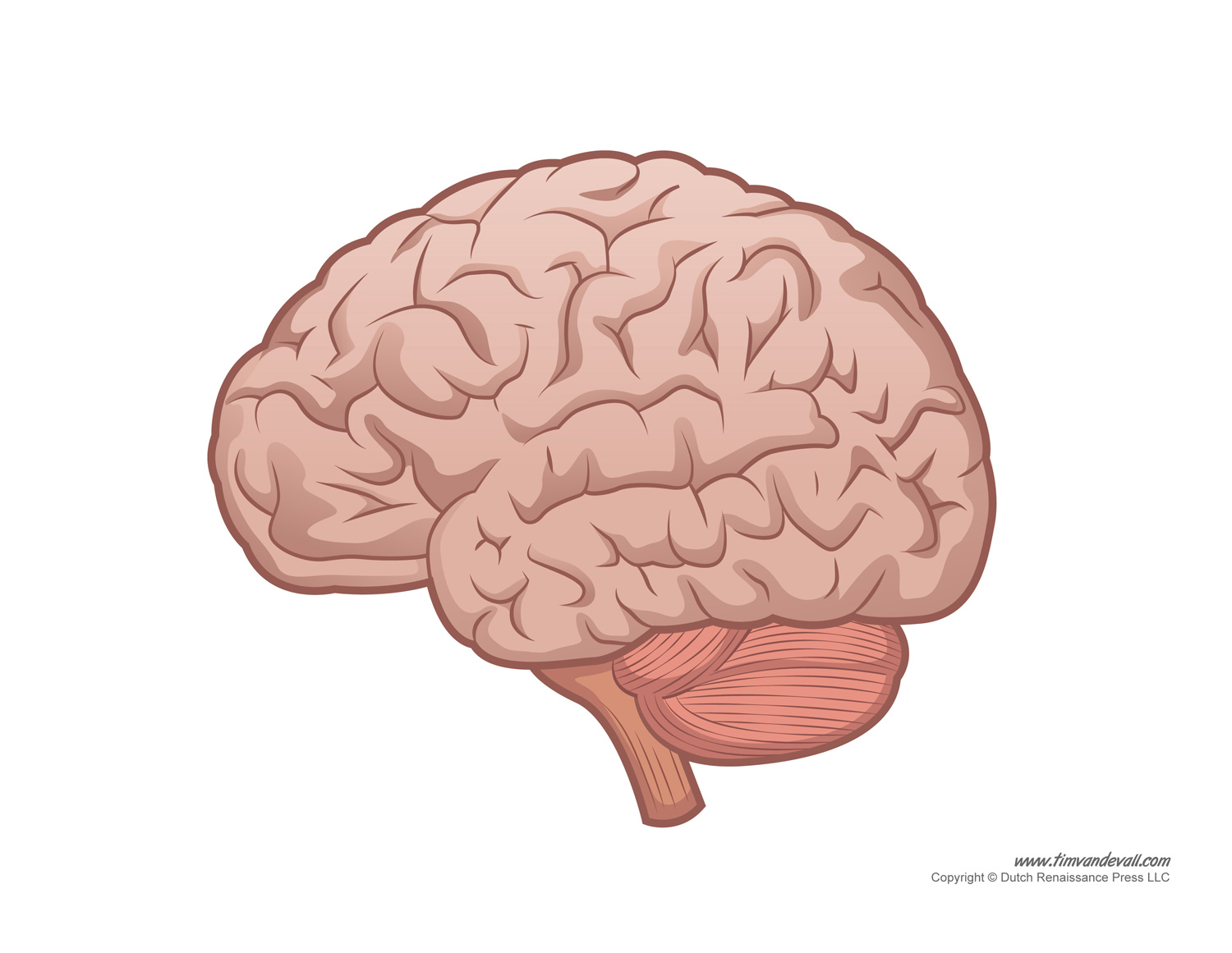 human brain diagram labeled unlabled and blank : blank brain diagram - findchart.co