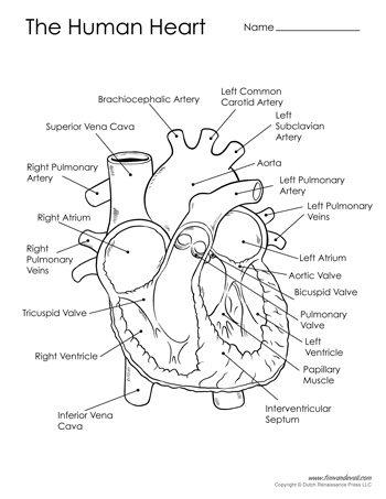 Human heart diagram black white tims printables human heart diagram black white ccuart Image collections