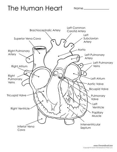 human heart printable black and white