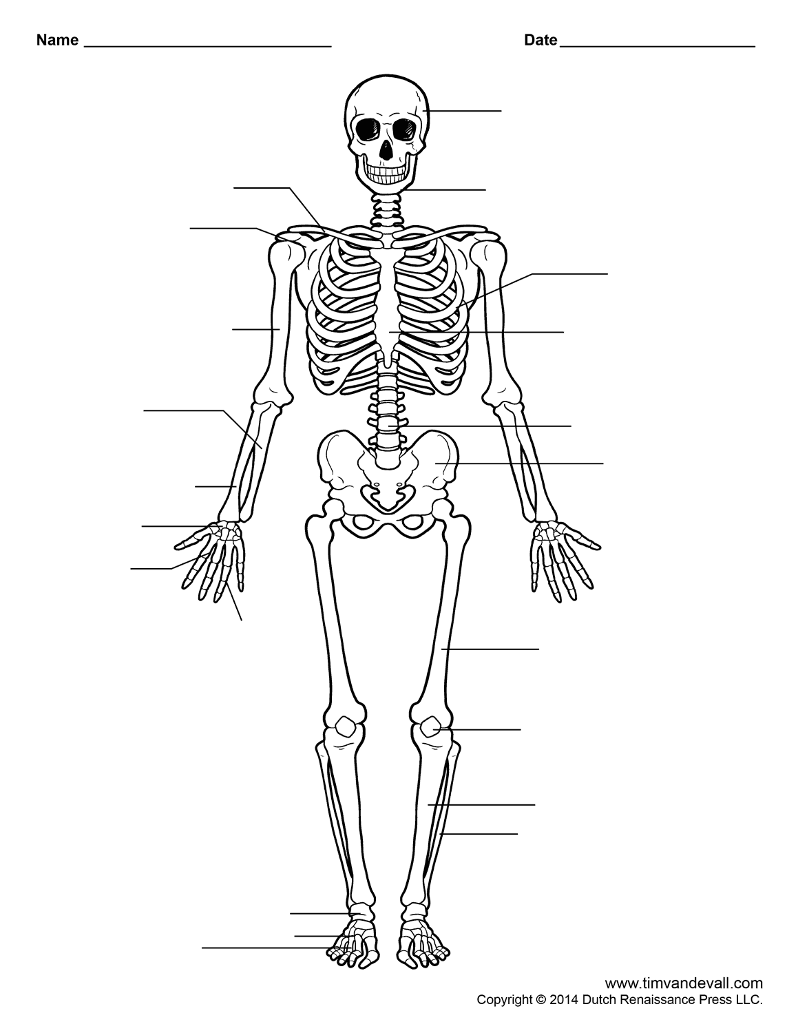 free printable human skeleton worksheet for students and teachers