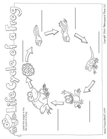 Frog life cycle worksheet pdf