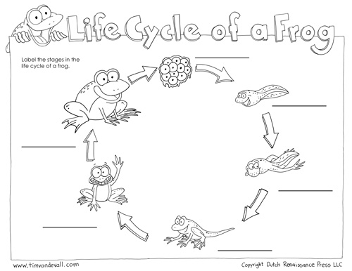 blank life cycle of a frog worksheet