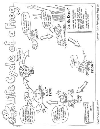 Life Cycle Of A Frog Tim S Printables