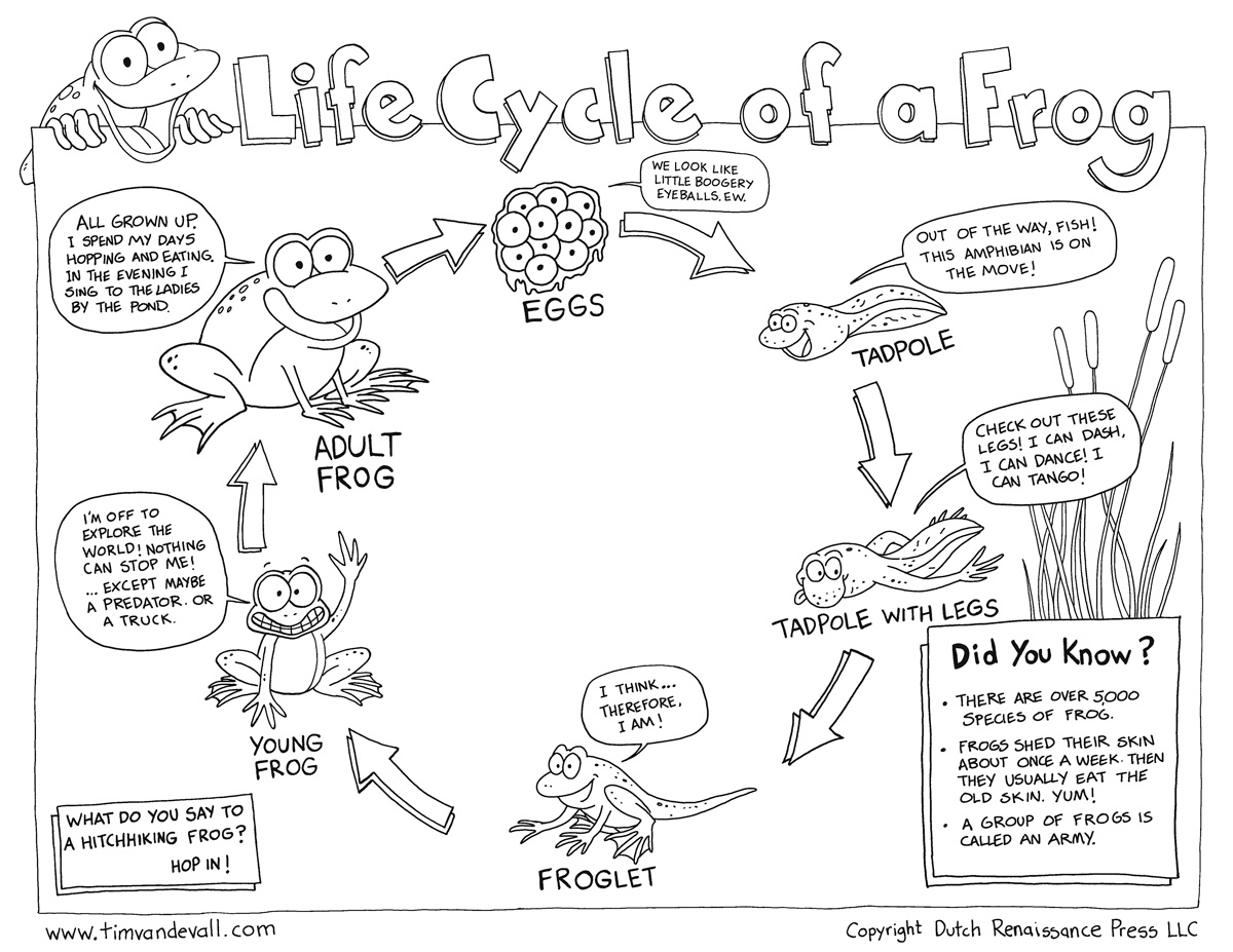 Worksheets Frog Life Cycle Worksheet free life cycle of a frog printable frog