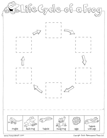 printable life cycle of a frog worksheet