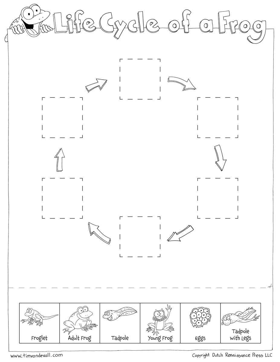 Worksheets Frog Life Cycle Worksheet frog life cycle cut paste tims printables paste