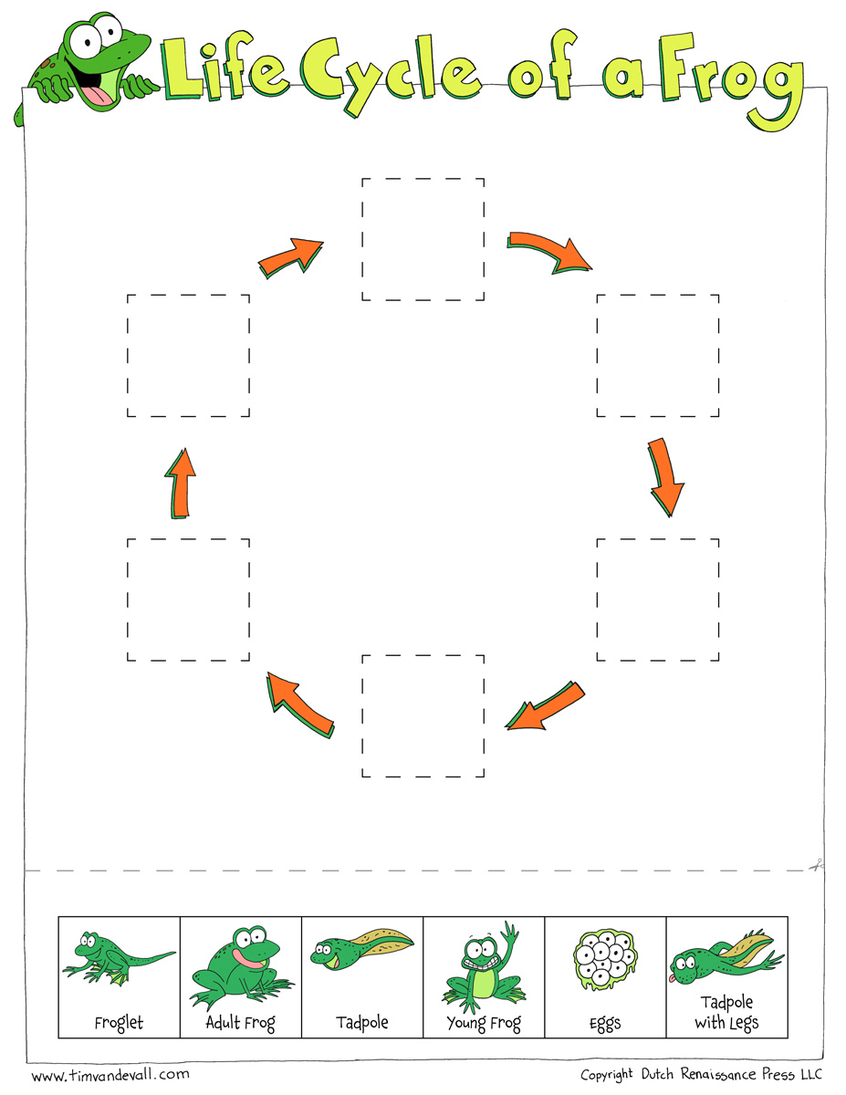 Frog Life Cycle Cut & Paste - Tim's Printables