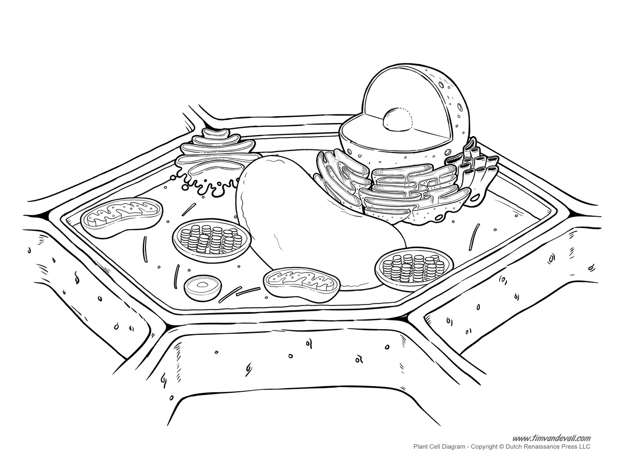 Plant Cell Diagram - Unlabeled - Tim's Printables