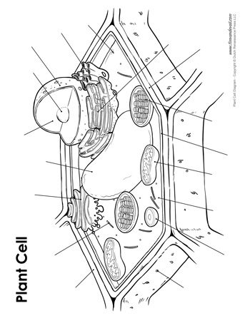 plant cell diagram unlabeled 350 tim s printables rh timvandevall com plant cell diagram labeled coloring sheet plant cell diagram labeled coloring sheet