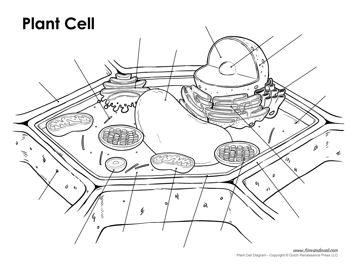 Blank Diagram Of A Plant Cell