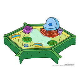 Bacterium cell diagram unlabeled search for wiring diagrams bacterium cell diagram unlabeled images gallery ccuart Image collections