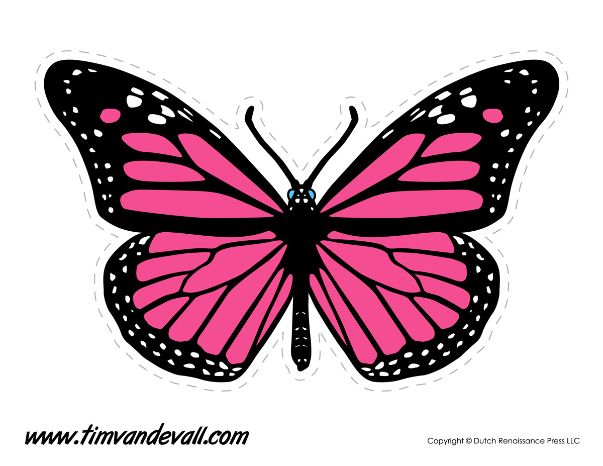 photograph relating to Printable Butterfly Pictures named Printable Butterfly - Tims Printables