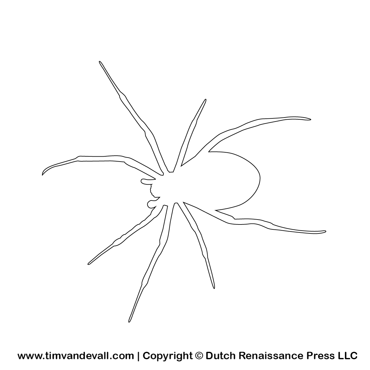 spider outline tim u0027s printables