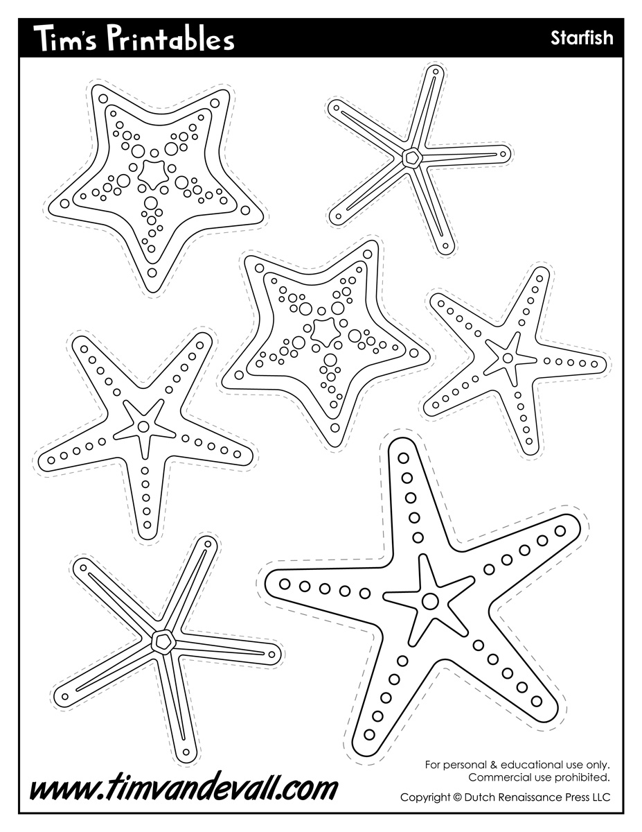 essay about starfish Humans impact the starfish in a couple ways for example when we go out into the ocean and play we can step on them also when we take them out of the water and play.