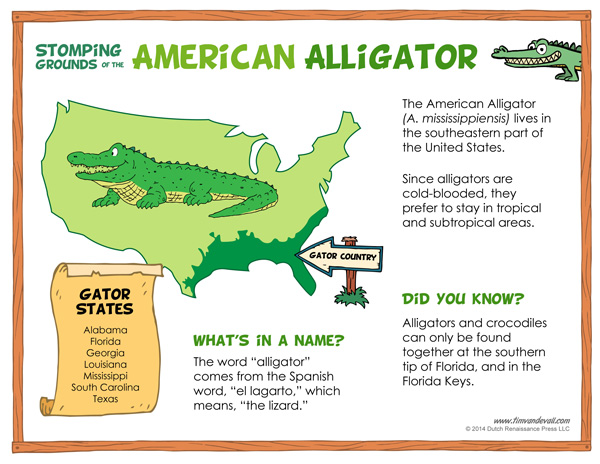 what do alligators eat